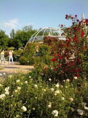 В Ботаническом саду благоухает около 200 видов роз (фотофакт), фото-8