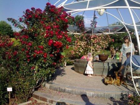 В Ботаническом саду благоухает около 200 видов роз (фотофакт), фото-9