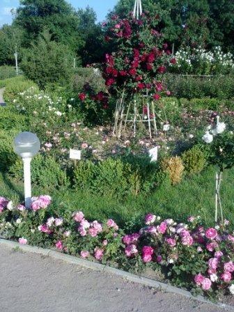 В Ботаническом саду благоухает около 200 видов роз (фотофакт), фото-10