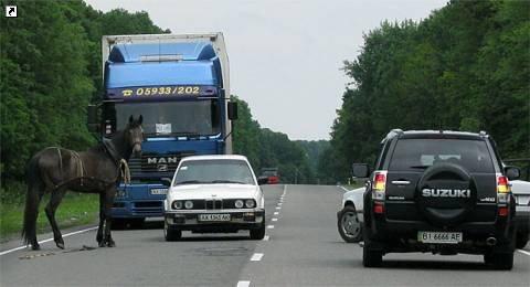 Под Харьковом лошадь блокировала движение по Киевской трассе (ФОТО), фото-1