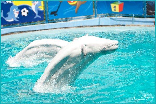 Морские Олимпийские Игры - открыты!, фото-3