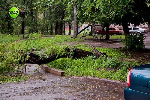 В Луганске в квартале Волкова упали 2 дерева (фото), фото-4