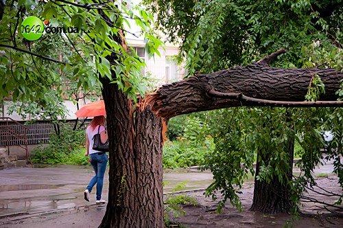 В Луганске в квартале Волкова упали 2 дерева (фото), фото-1