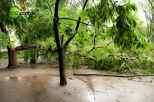 В Луганске в квартале Волкова упали 2 дерева (фото), фото-2