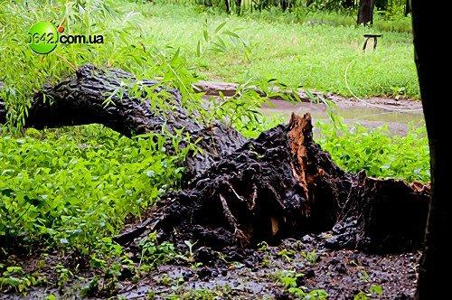 В Луганске в квартале Волкова упали 2 дерева (фото), фото-6
