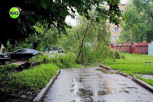 В Луганске в квартале Волкова упали 2 дерева (фото), фото-8