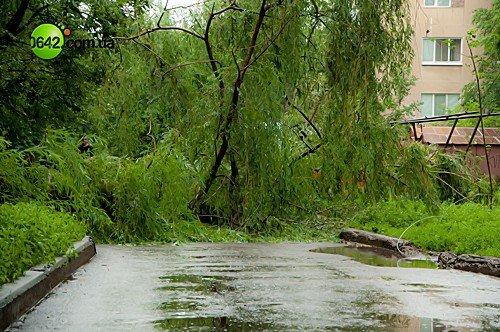 В Луганске в квартале Волкова упали 2 дерева (фото), фото-9