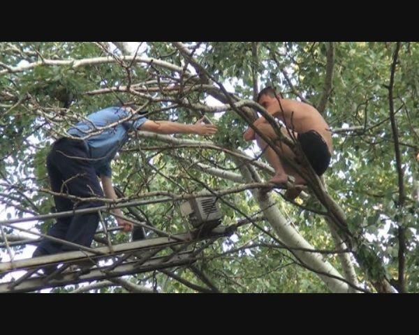 В Запорожье полуголый пьяный мужчина застрял на дереве (ФОТО), фото-2