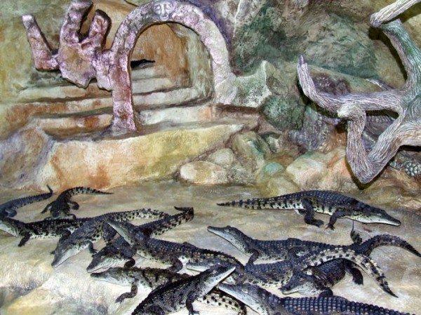 В Ялте открыли крокодиляриум (ФОТО+ВИДЕО), фото-6
