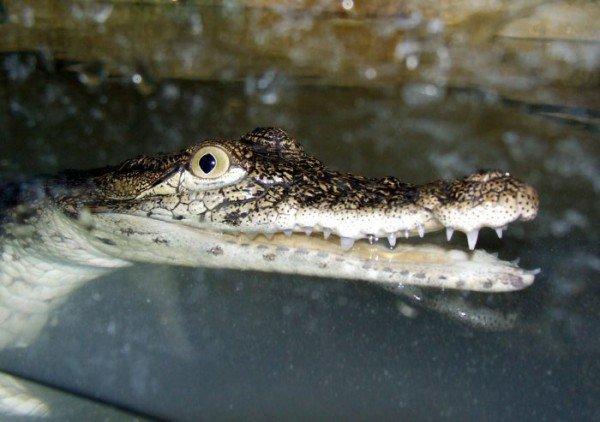 В Ялте открыли крокодиляриум (ФОТО+ВИДЕО), фото-7