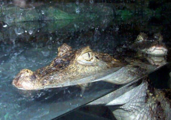 В Ялте открыли крокодиляриум (ФОТО+ВИДЕО), фото-9