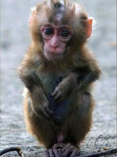 Николаевский зоопарк пополнился новорожденными животными (ФОТО), фото-1