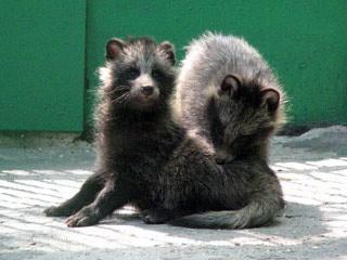Николаевский зоопарк пополнился новорожденными животными (ФОТО), фото-2