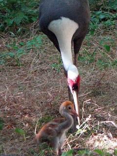 Николаевский зоопарк пополнился новорожденными животными (ФОТО), фото-4