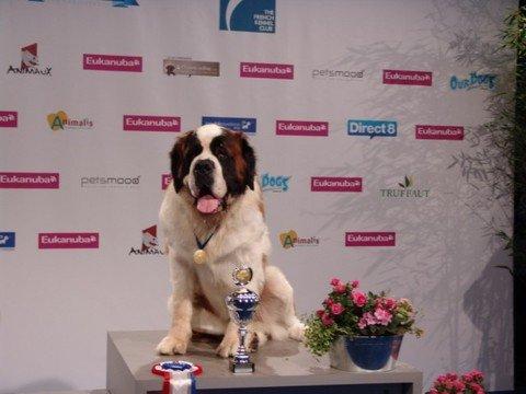 Тернопільський сенбернар Жан став чемпіоном світу, фото-5
