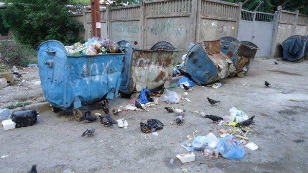 Продолжение мусорной проблемы в Симферополе (фото), фото-1