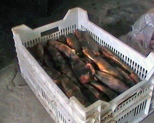 В Луганской области выявлен подпольный цех в котором переупаковывались просроченные продукты (фото), фото-3