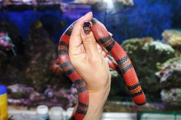 Из Одесского зоопарка сбежала змея (ФОТО), фото-1