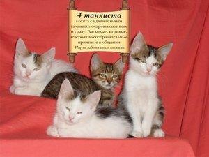 На Дерибасовской раздают бездомных животных (фото), фото-3