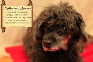 На Дерибасовской раздают бездомных животных (фото), фото-2
