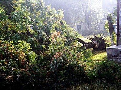 В Луганской области стихия валила деревья и срывала крыши (фото), фото-3