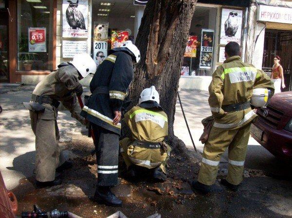 В центре Одессы необычный пожар. Возле хозрасчетной поликлиники горит дерево (фото), фото-2