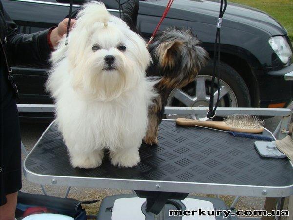 На выходных в Житомире прошла выставка собак «Грандус CАС. Полесье-2011» (ФОТО), фото-10