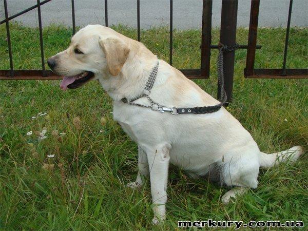 На выходных в Житомире прошла выставка собак «Грандус CАС. Полесье-2011» (ФОТО), фото-9