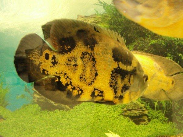 В Луганске плавают пираньи и жует бананы Аванский макак (фото), фото-3
