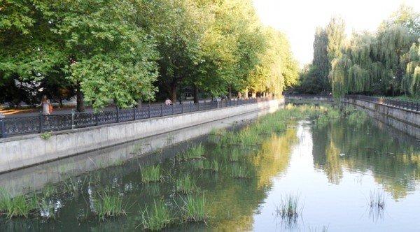 Река Салгир обросла «щетиной» (фото), фото-1