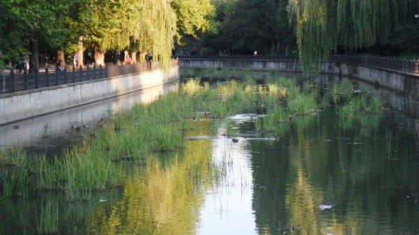 Река Салгир обросла «щетиной» (фото), фото-3