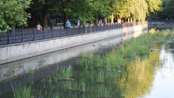 Река Салгир обросла «щетиной» (фото), фото-4