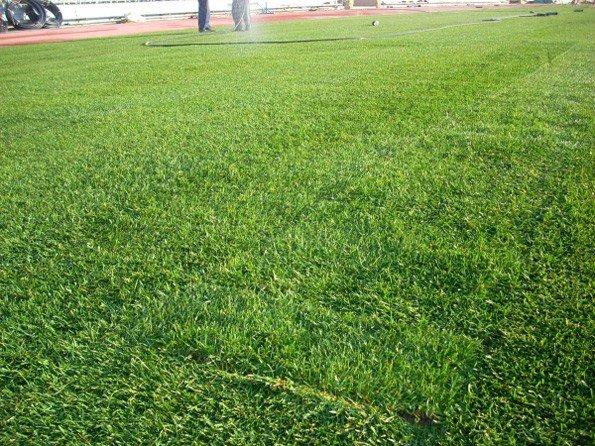 На стадионе «Авангард» начались работы по укладке газона, фото-4