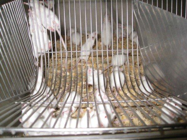 Горловским журналистам рассказали, как производят  таблетки и показали подопытных кроликов и мышей, фото-10