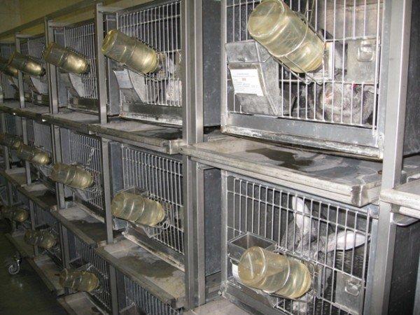 Горловским журналистам рассказали, как производят  таблетки и показали подопытных кроликов и мышей, фото-9