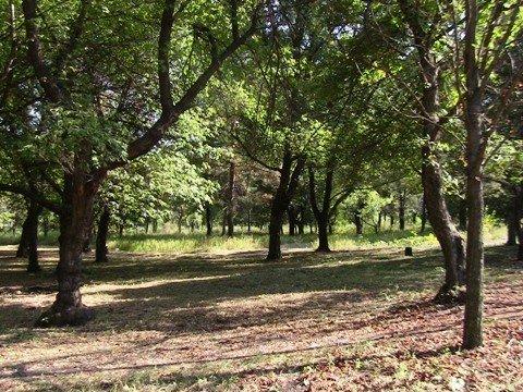 Для отдыха жителей Калининского района благоустраивается парк Гурко, фото-3