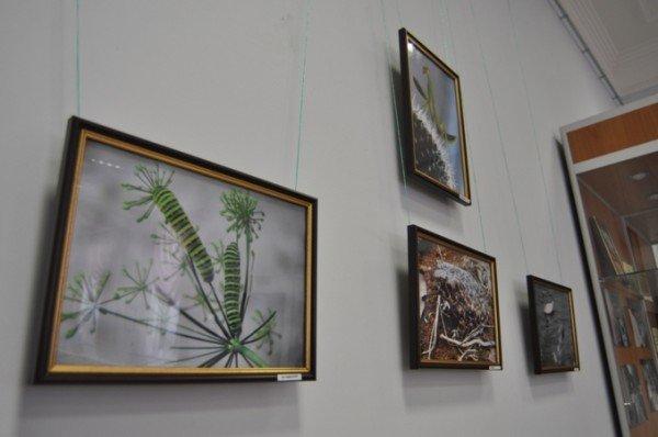 В Симферополе выставили фотографии «Отблески и отражения» (фото), фото-1