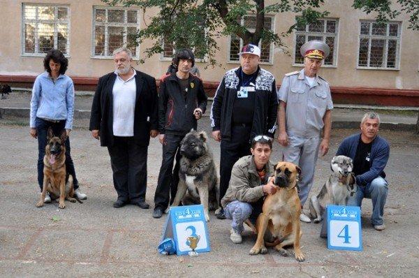 В Симферополь привезли лучших собак со всей Украины (фото), фото-1