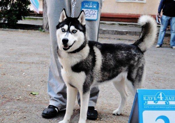 В Симферополь привезли лучших собак со всей Украины (фото), фото-2
