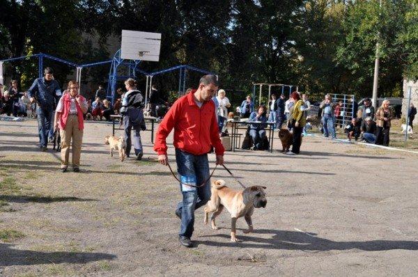 В Симферополь привезли лучших собак со всей Украины (фото), фото-5
