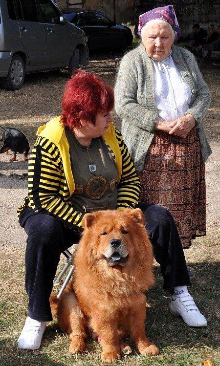 В Симферополь привезли лучших собак со всей Украины (фото), фото-6