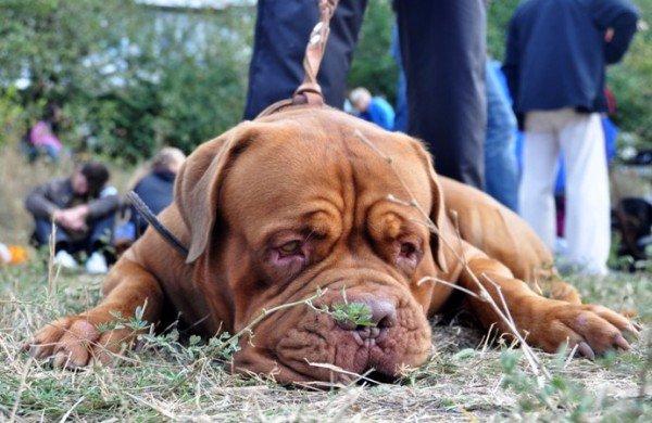 В Симферополь привезли лучших собак со всей Украины (фото), фото-7