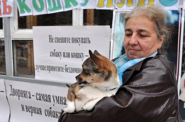 В Симферополе ищут тех, кто готов приютить четвероногих сироток (фото), фото-5
