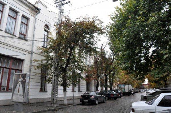 В Симферополе продолжают сносить столетние опоры (фото), фото-1