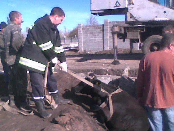 Артемовские спасатели вытащили из ямы корову, фото-1