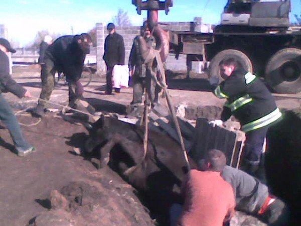 Артемовские спасатели вытащили из ямы корову, фото-2