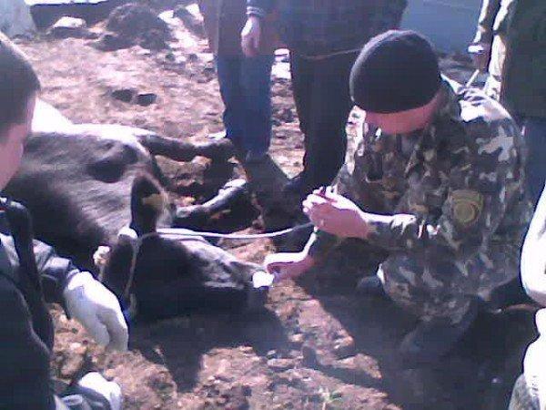 Артемовские спасатели вытащили из ямы корову, фото-3