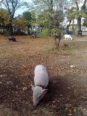 Защитники животных проверили передвижной цирк «Европа» (ФОТО), фото-1