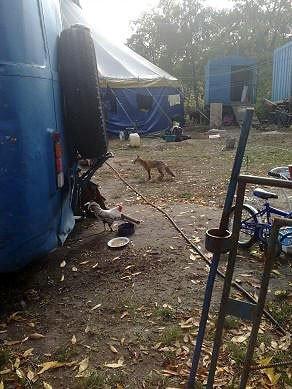 Защитники животных проверили передвижной цирк «Европа» (ФОТО), фото-2
