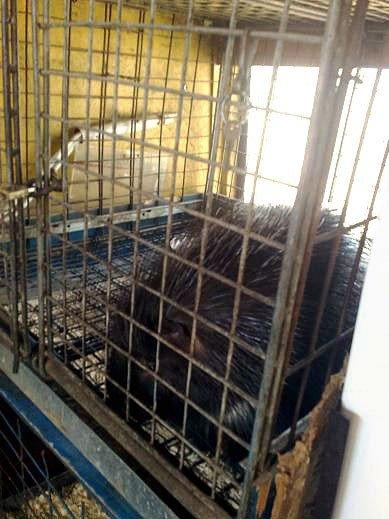 Защитники животных проверили передвижной цирк «Европа» (ФОТО), фото-5